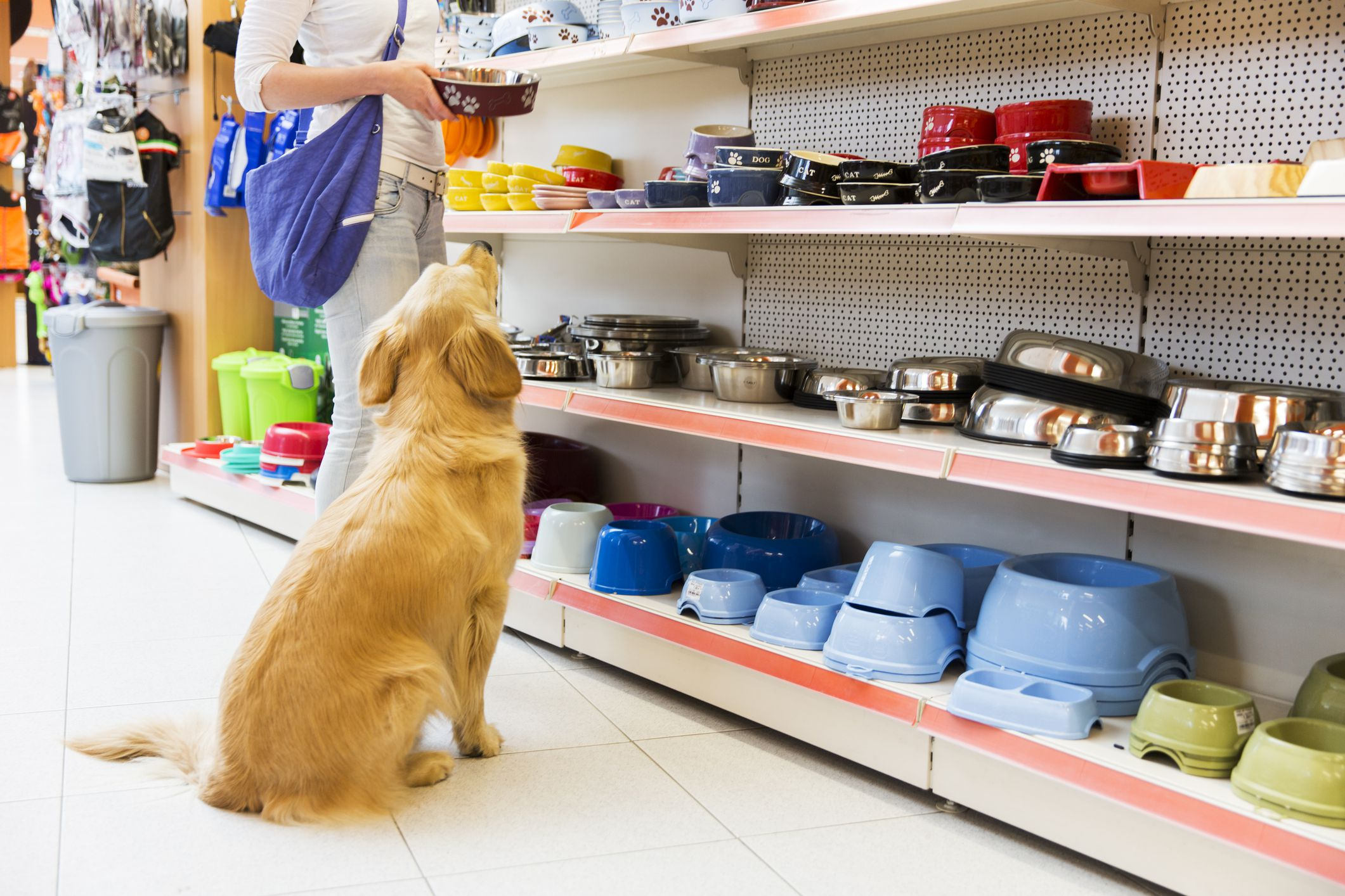 Cool Advertising Ideas for Pet Shops