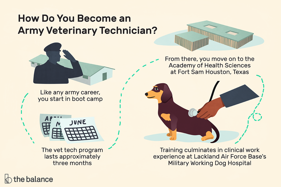 "Image shows a map, starting with a person in military uniform saluting, then several calendar pages, then a military base, then a dachshund with a stethoscope held to its belly. Text reads: ""How do you become an army veterinary technician: like any army career, you start in boot camp. The vet tech program lasts approximately three months. From there, you move on to the academy of health sciences at fort sam houston, texas. Training culminates in clinical work experience at Lackland Air Force Base's military working dog hospital."""