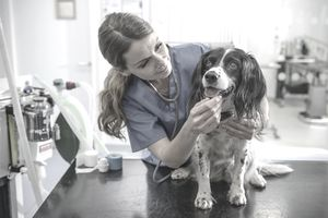 Veterinarian tending to dog patient