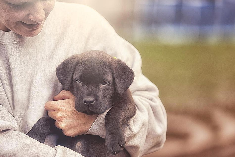 cute puppy who will become a service dog.