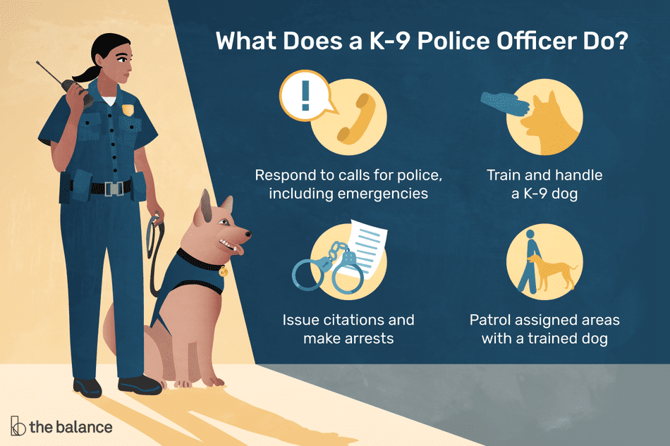 What does a K-9 police officer do? Respond to calls for police, including emergencies, train and handle a K-9 dog, issue citations and make arrests, patrol assigned areas with a trained dog