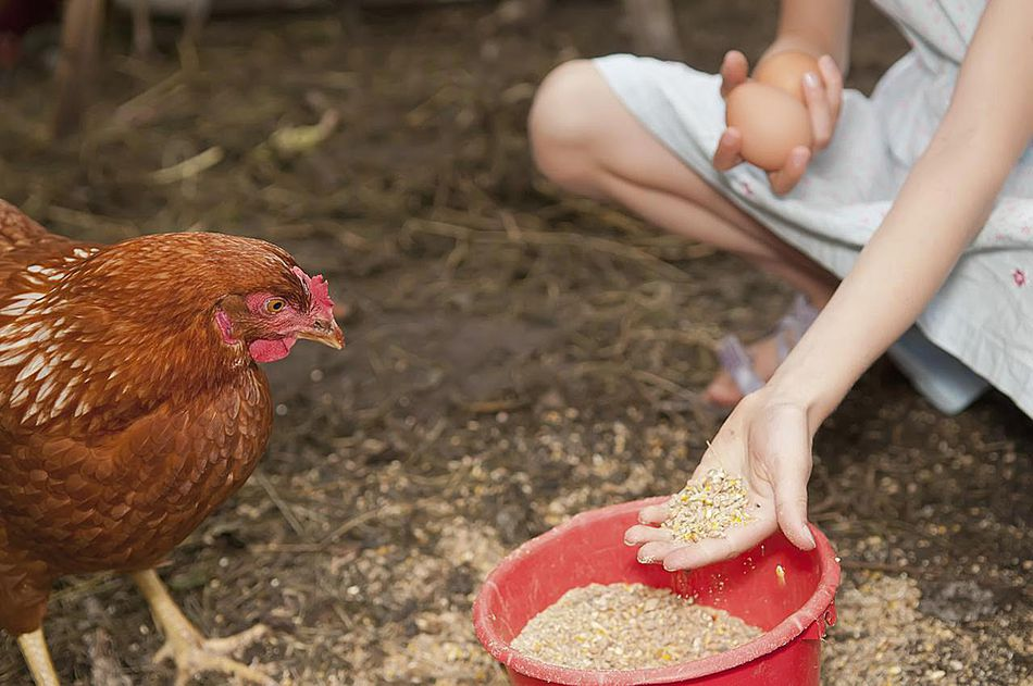 Germany, Brandenburg, Girl feeding hen