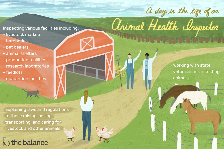 "Image shows a farm scene with horses, chickens, a cat, with a farmer, doctor, and health inspector on the farm as well. Text reads: ""A day in the life of an animal health inspector: working with state veterinarians in testing animals, explaining laws and regulations to those raising, selling, transporting, and caring for livestock and other animals. Inspecting various facilities including: livestock markets, hatcheries, pet dealers, animal shelters, production facilities, research laboratories, feedlots, quarantine facilities"""