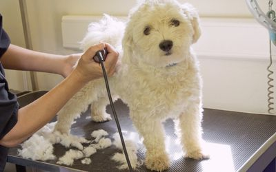 Follow These Steps To Start A Successful Mobile Pet Grooming Business