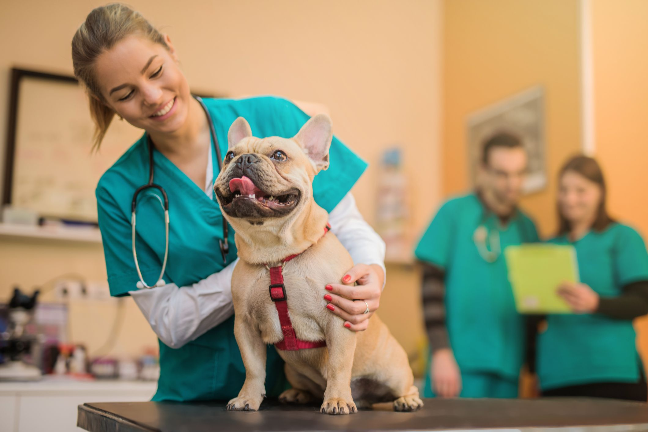 Safety Tips for Working With Animals