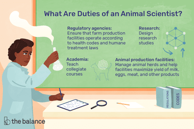 What are duties of an animal scientists? Regulatory agencies: Ensure that farm production facilities operate according to health codes and humane treatment laws; Research: Design research studies; Academia: Teach collegiate courses; Animal production facilities: Manage animal herds and help facilities maximize yield of milk, eggs, meat and other products