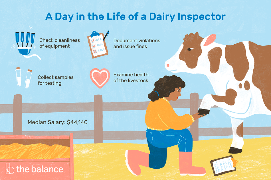 """Image shows a woman looking at the foot of a cow on a farm. Text reads: """"A day in the life of a dairy inspector: check cleanliness of equipment, document violations and issue fines, collect samples for testing, examine health of the livestock. Median salary: $44,140"""""""