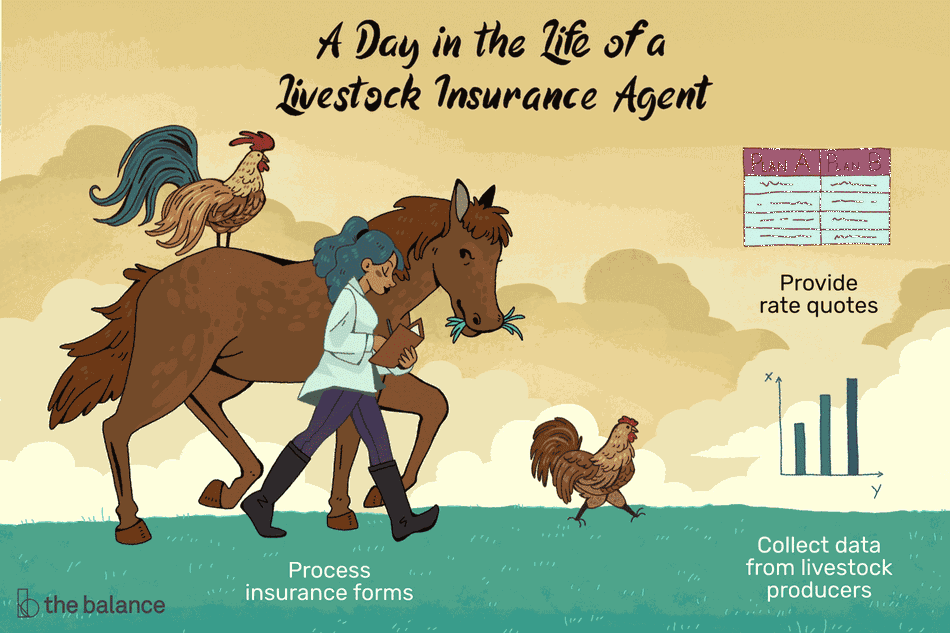 A day in the life of a livestock insurance agent: Provide rate quotes, process insurance forms, collect data from livestock producers