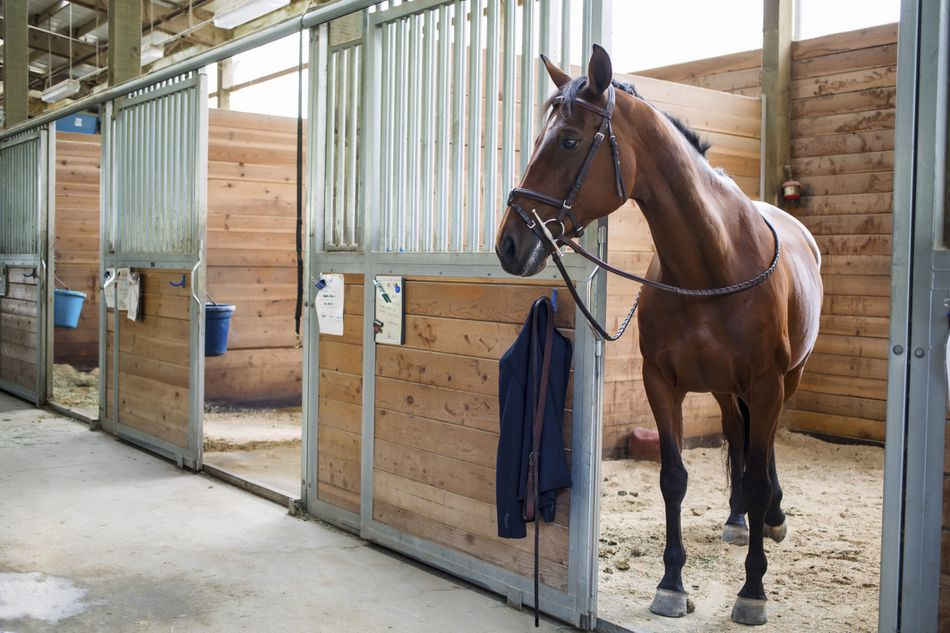 A horse in a stable