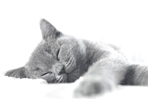 Portrait of a kitten Sleeping