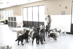 Dog daycare owner holding a jar of treats surrounded by dogs of various breeds.