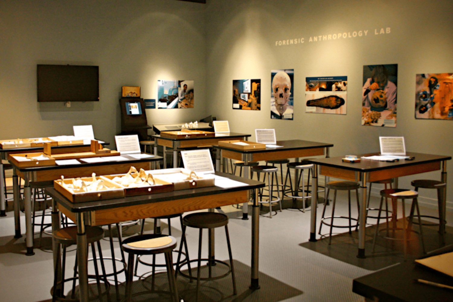 Forensic Anthropology Lab at the National Museum of Natural History, Smithsonian Institute, Washington D.C.