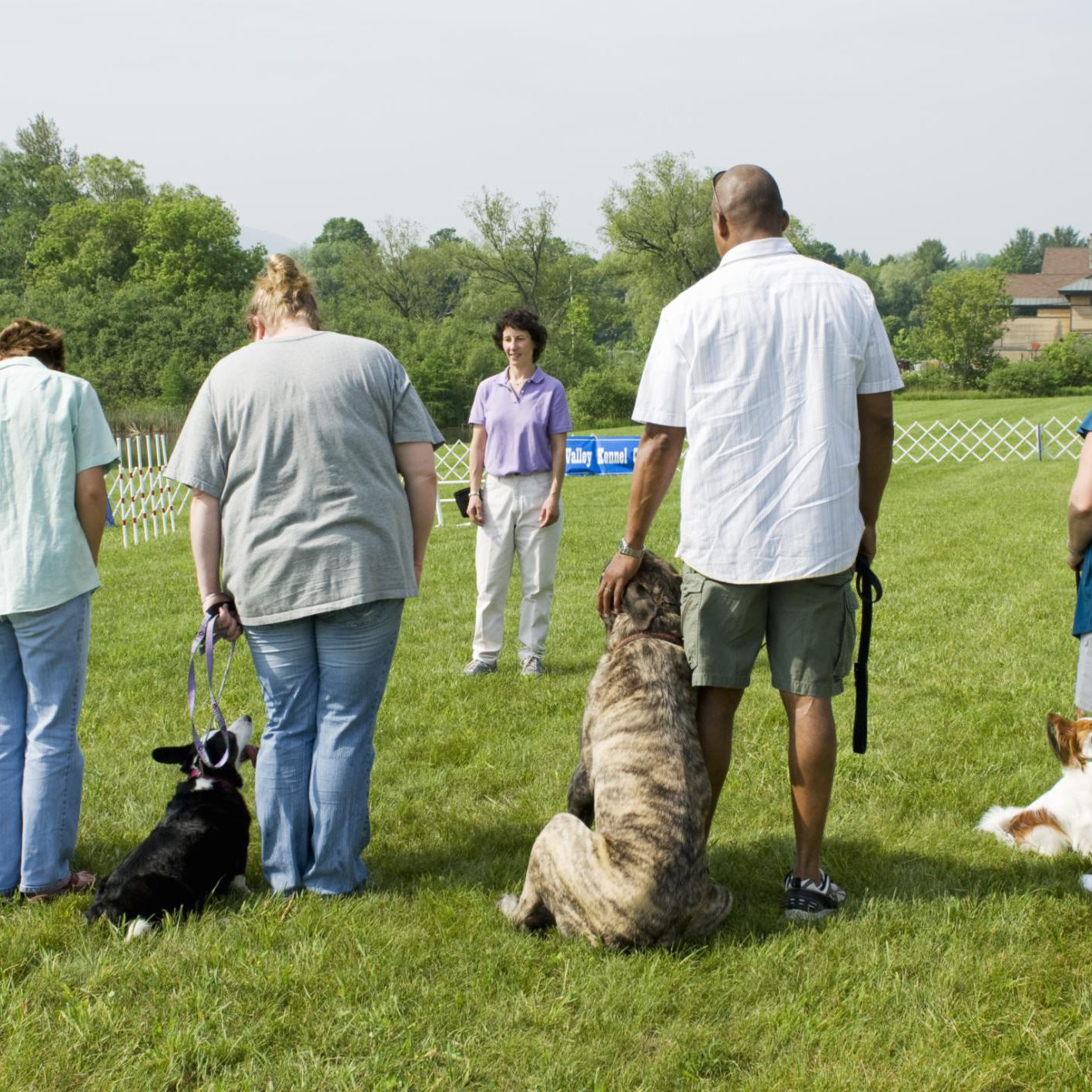 Top Reasons to Become a Dog Trainer