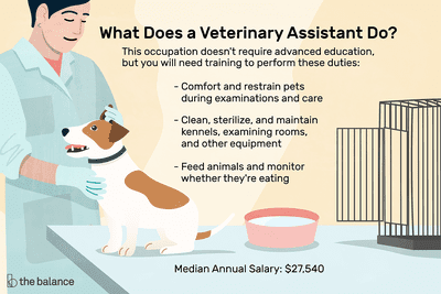 Veterinary Assistant Job Description: Salary, Skills, & More