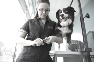 Groomer trimming a dog's nails