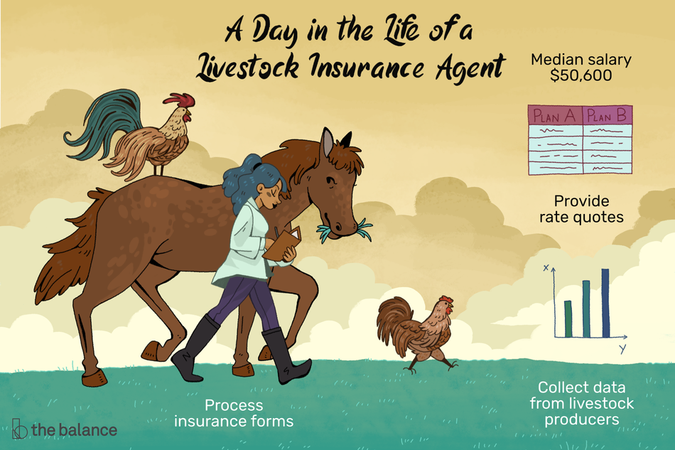"Image shows a woman walking a horse, a chick and a rooster through a field. Text reads: ""A day in the life of a livestock insurance agent. Median salary: $50,600, provide rate quotes, collect data from livestock producers, process insurance forms"""