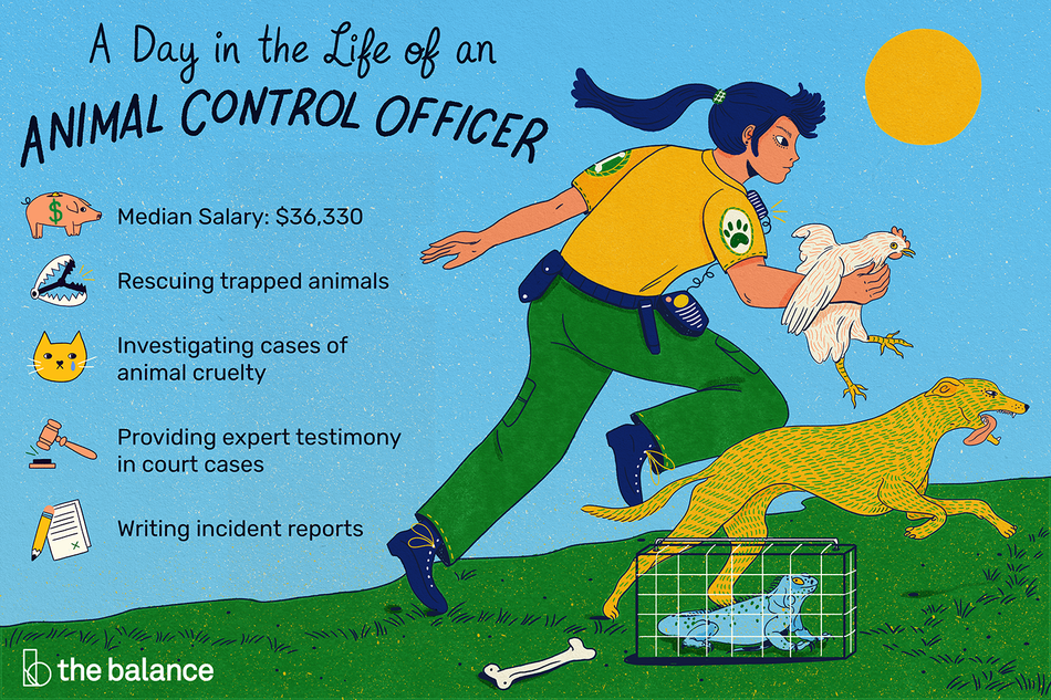 """Image shows an animal control officer holding a rooster and running in the direction of a greyhound. There is a lizard in a crate at her feet, as well as a dog bone. Text reads: """"A day in the life of an animal control officer: rescuing trapped animals, investigating cases of animal cruelty, providing expert testimony in court cases, writing incident reports, median salary: $36,330"""""""