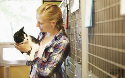 Learn How to Start an Animal Rescue or No-Kill Shelter