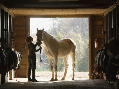 Stable hand grooms a white horse