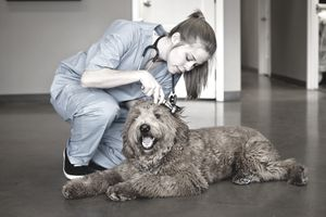Veterinarian examining a dog