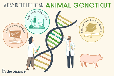A day in the life of an animal geneticist: Analyze collect data, Use laboratory equipment, Bachelor's and graduate degree