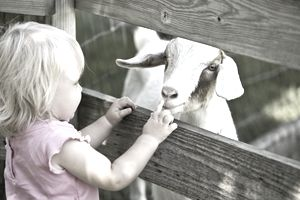 Child touching goat at a petting zoo