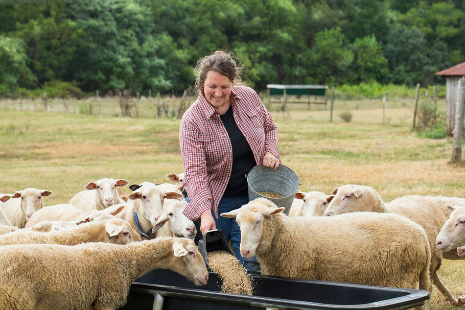 Caucasian farmer feeding sheep in field