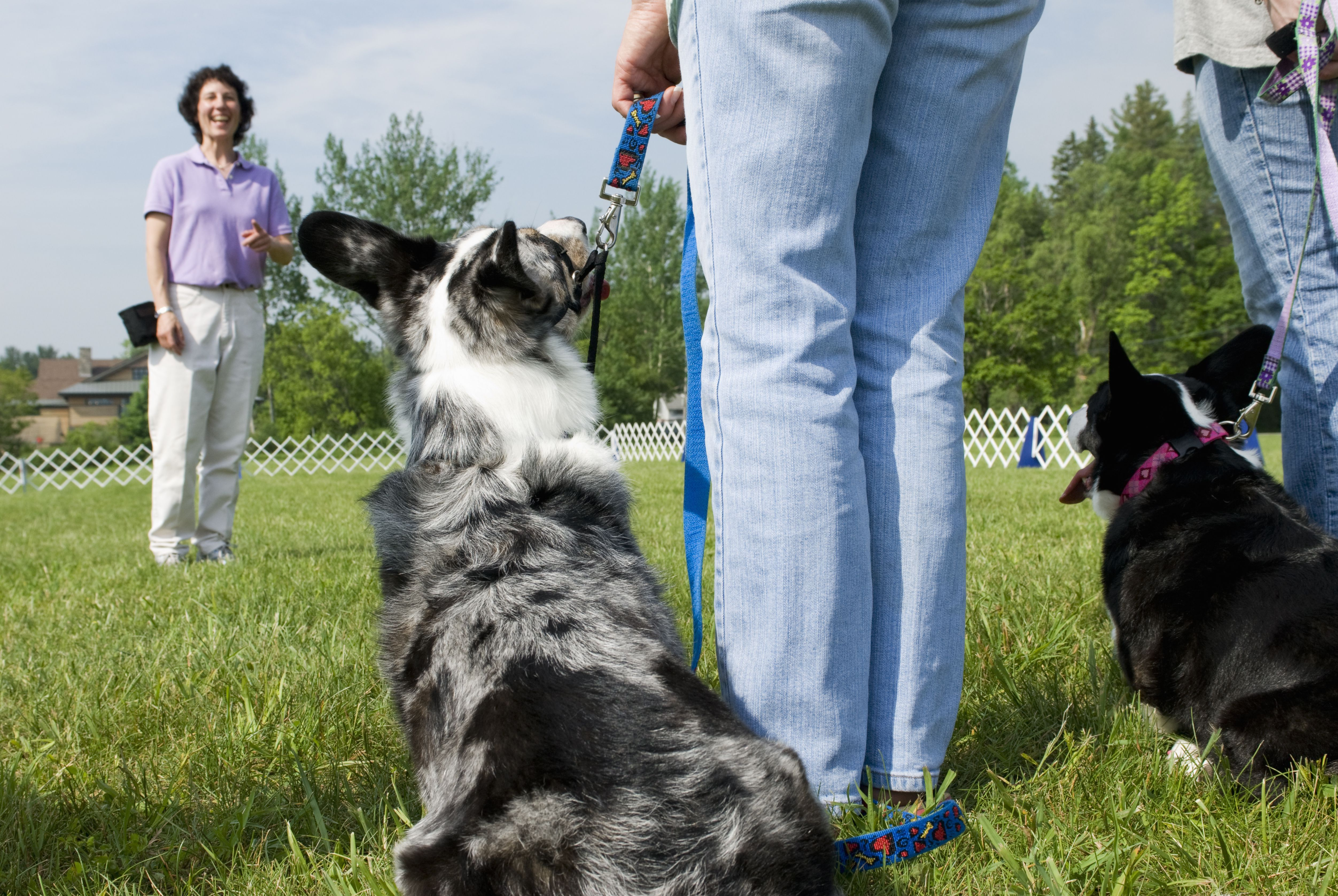 Do You Speak Canine? Consider a Career as a Dog Trainer