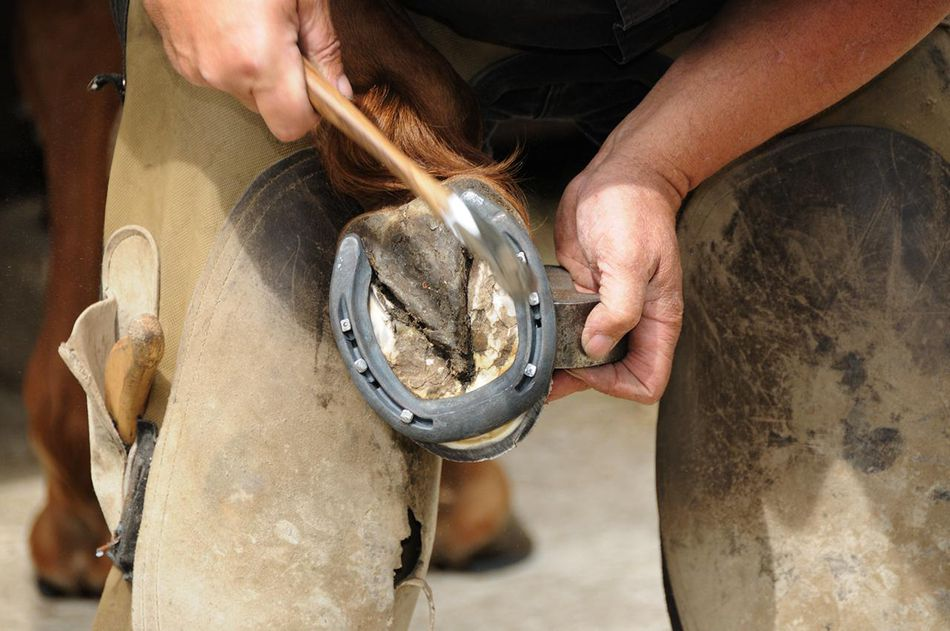 Farrier shoeing a horse