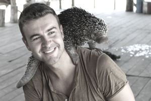 Man playing with Brazilian porcupine