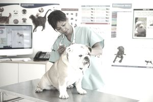 The Best Veterinary Schools in the United States
