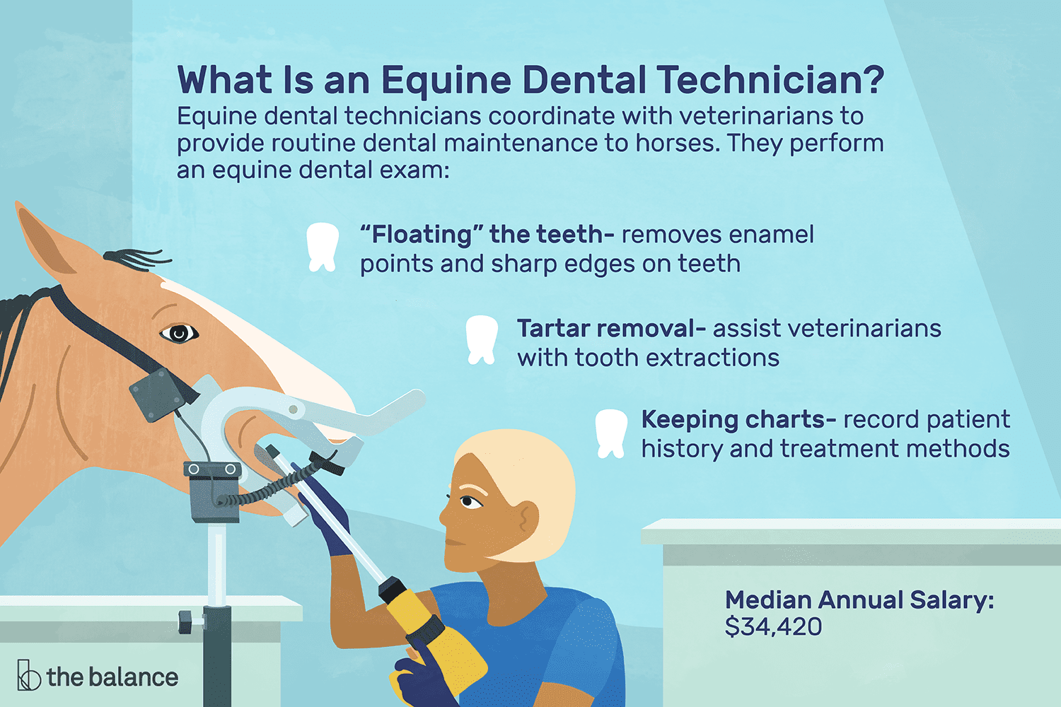 Equine Dental Technician Job Description: Salary, Skills, & More