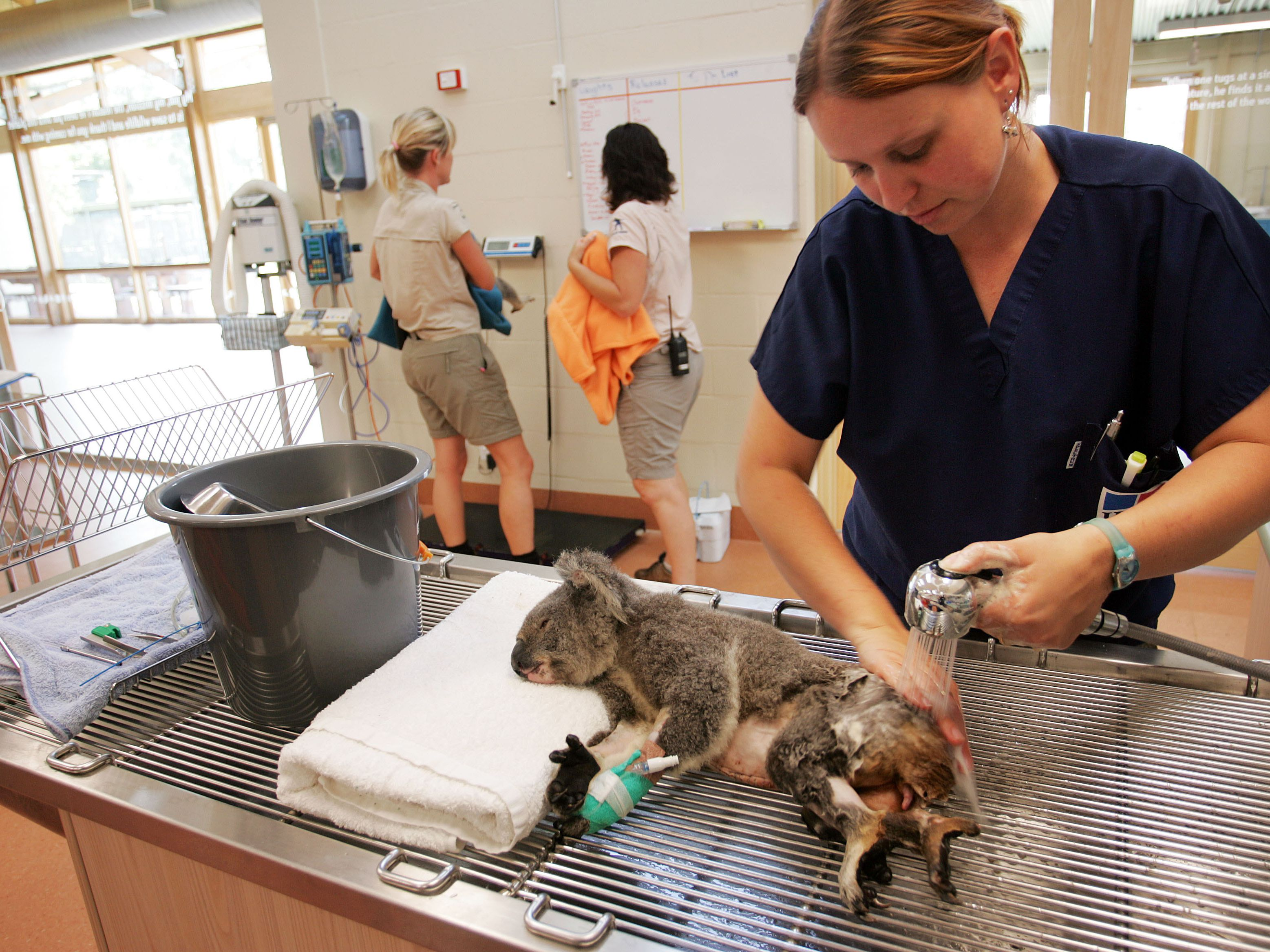 Zoo Veterinary Technician Career Profile