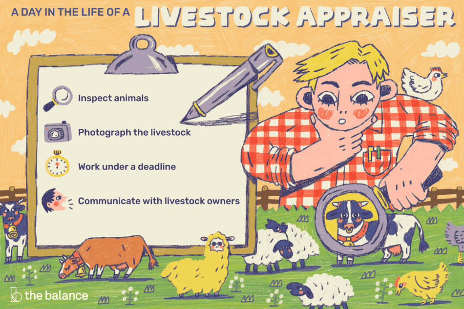 A day in the life of a livestock appraiser: Inspect animals, photograph the livestock, work under a deadline, communicate with livestock owners