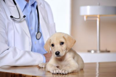 Small animal vets frequently treat dogs and cats.