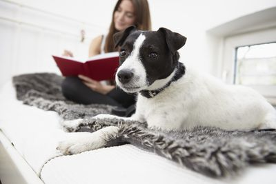 Young woman sitting on bed with dog writing diary