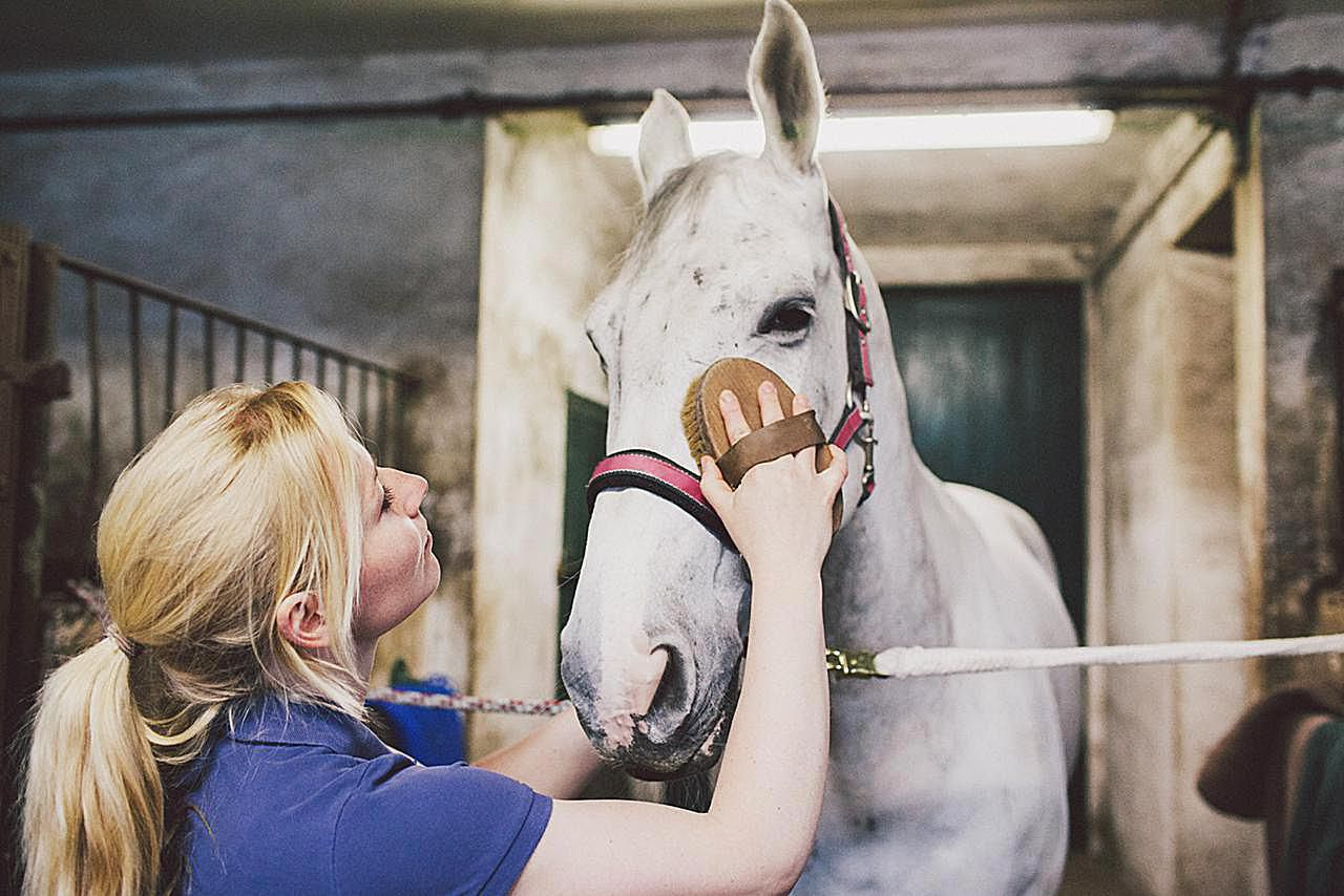 learn about being a horse groomer