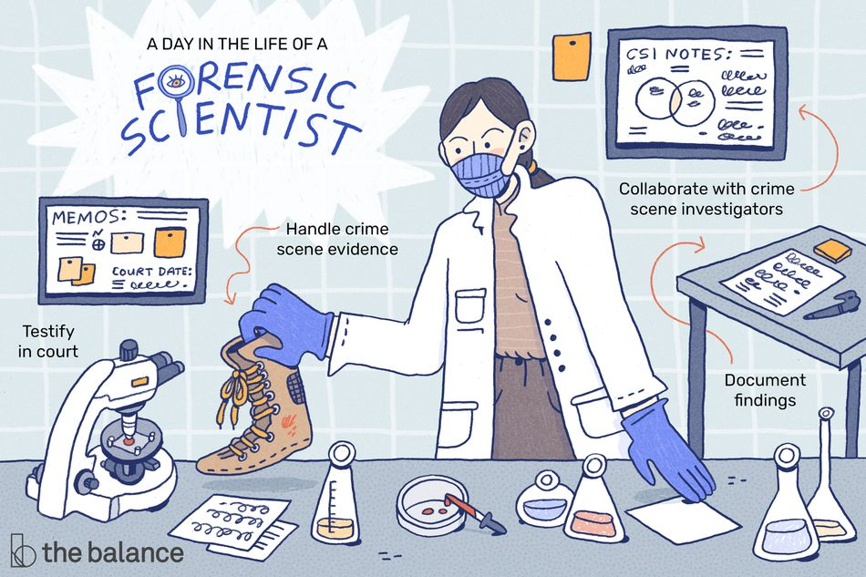 a day in the life of a forensic scientist: testify in court, handle crime scene evidence, document findings, and collaborate with crime scene investigators