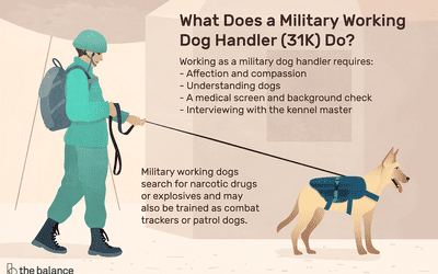 8 Essential Skills You Need for Working With Dogs