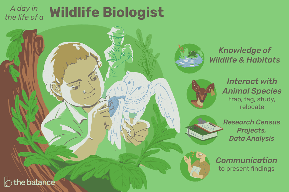 a day in the life of a wildlife biologist