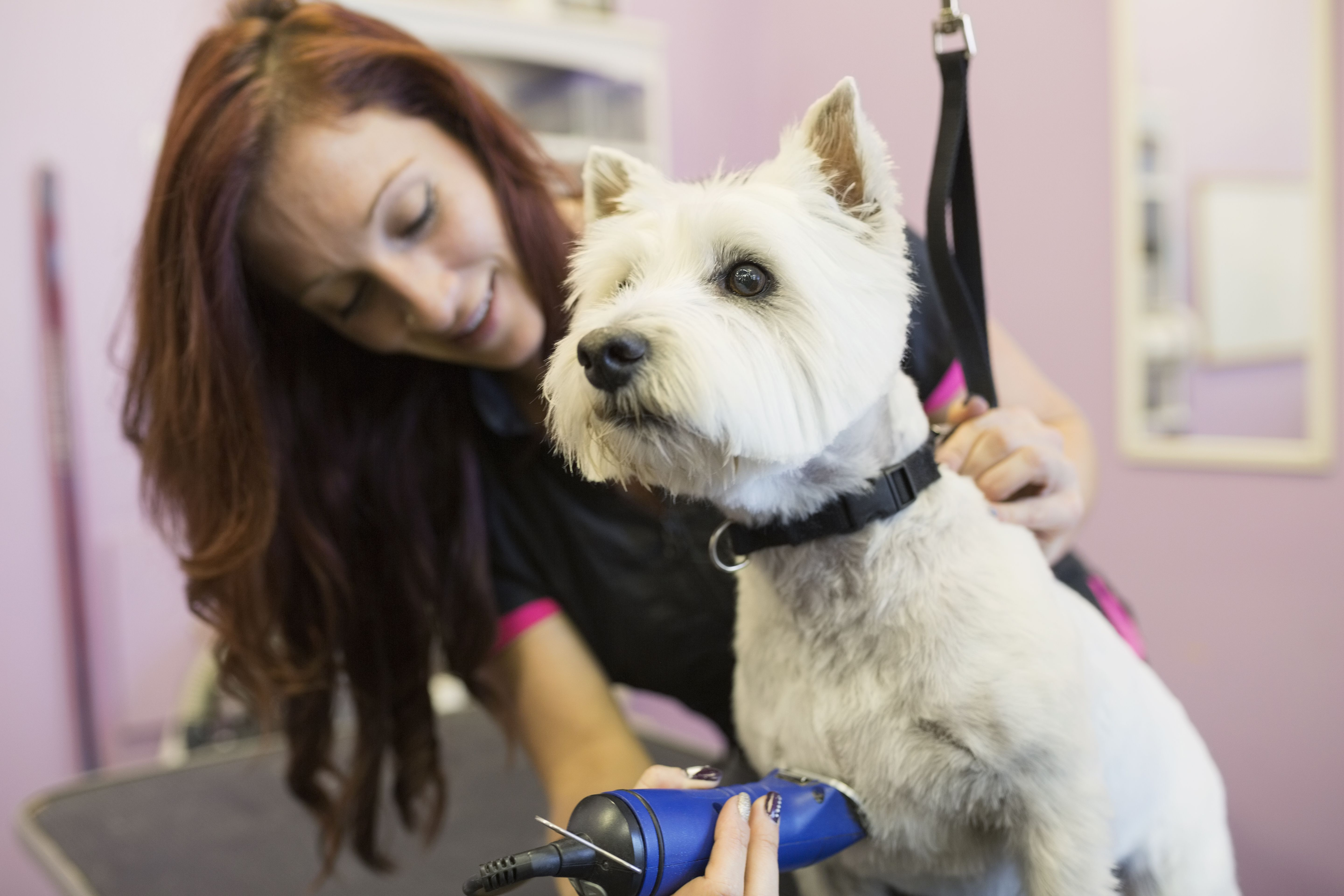 Dog Grooming Courses West Yorkshire