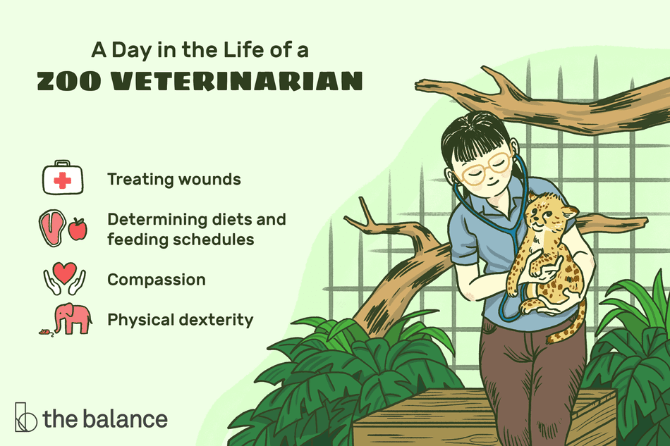 A day in the life of a zoo veterinarian: Treating wounds, determining diets and feeding schedules, compassion, physical dexterity