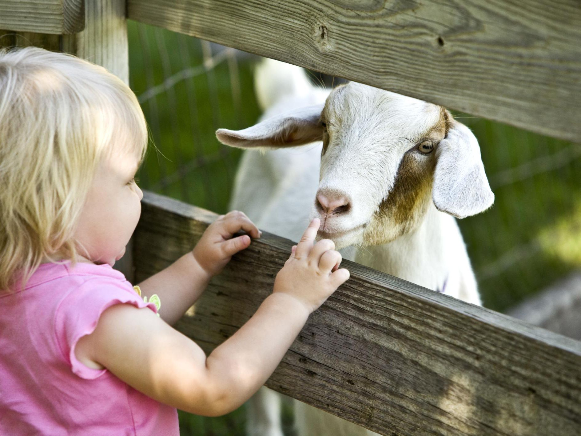 How to Start a Petting Zoo Business