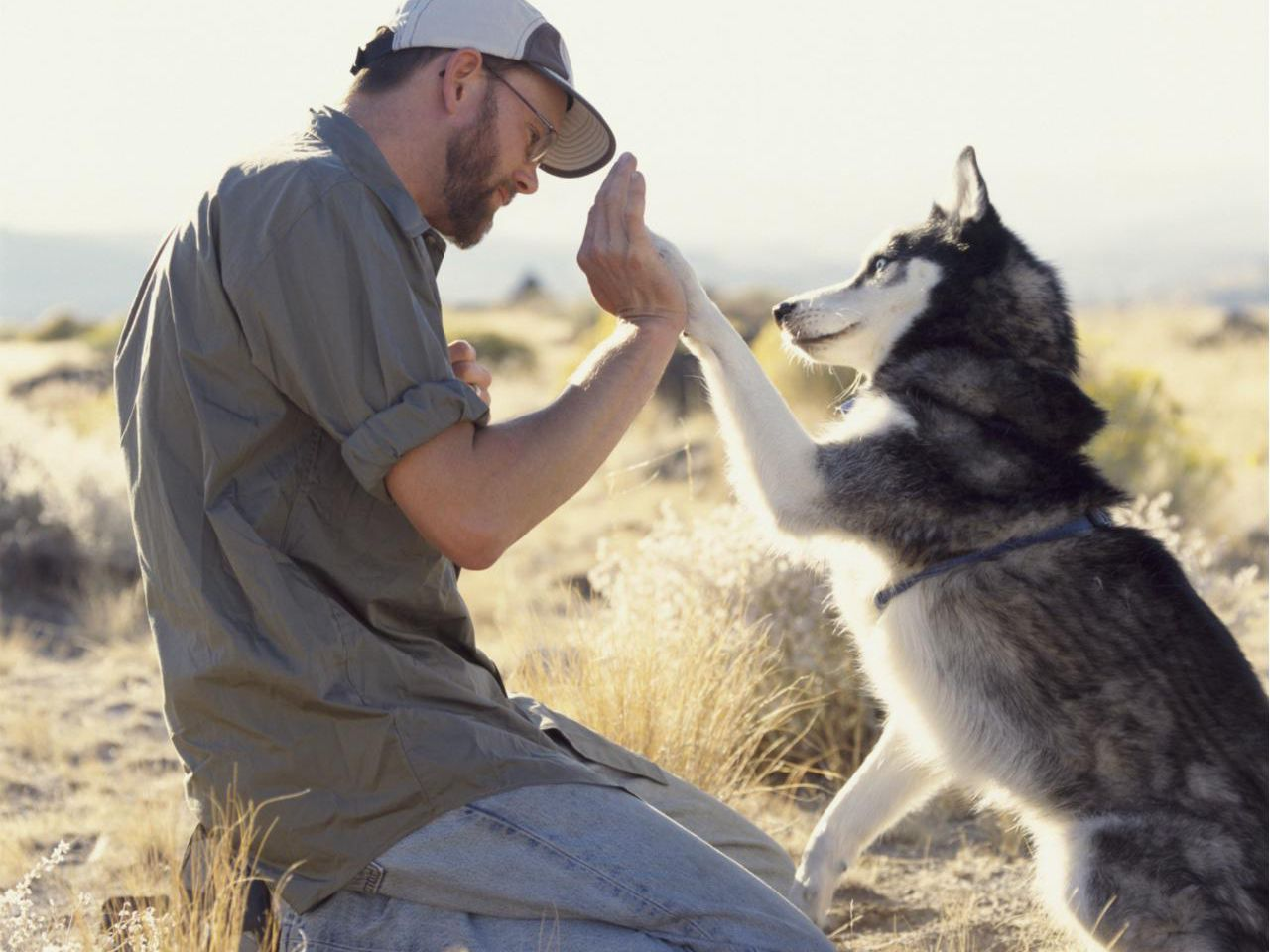 What Does an Animal Trainer Do?