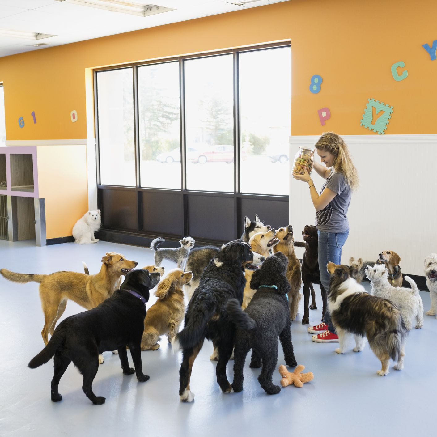 Dog Daycare Startup Tips and Suggestions
