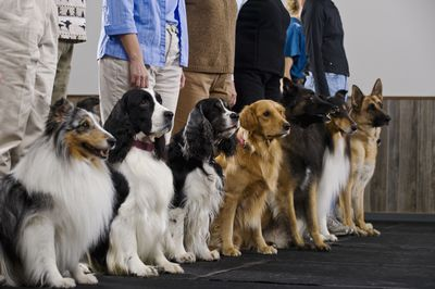 A group of dogs with their owners at an obedience class