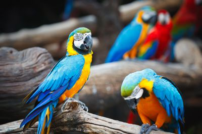Exotic Bird Breeder Information