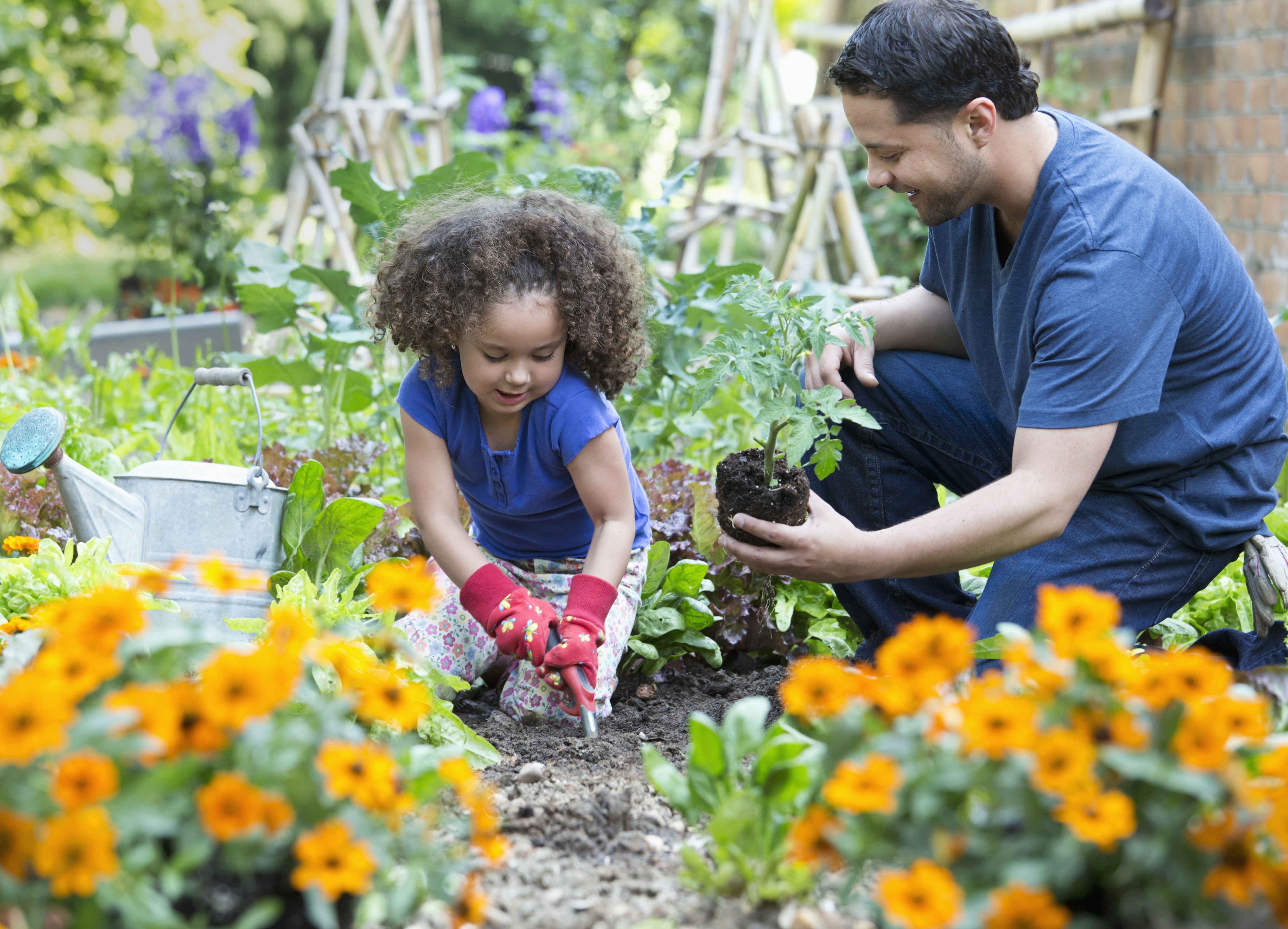 Hispanic father and daughter gardening together