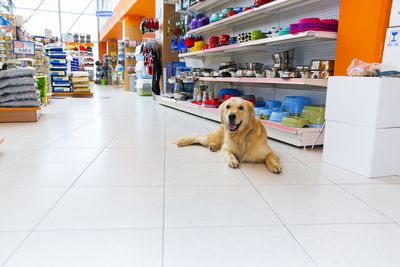 Tips on How to Name a Pet Business
