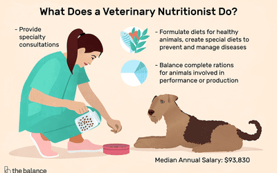 Veterinary Radiologist Job Description: Salary, Skills, & More